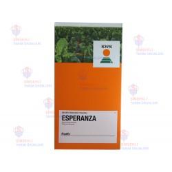 Kws Esperanza Şeker Pancar Tohumu Kaplı