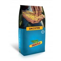 Monsanto Dekalp DKC5709 Mısır Tohumu İlaçlı