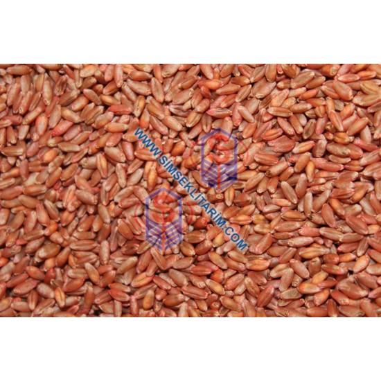 Tasaco Esperia Ekmeklik Sertifikalı Buğday Tohumu 50 KĞ.